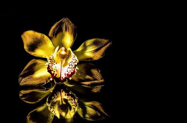 Orquideas regalos